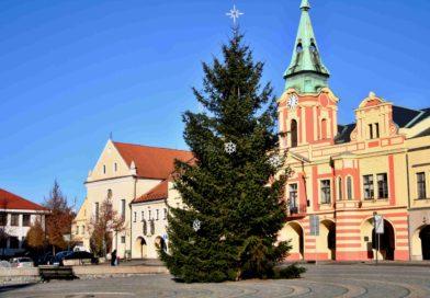 Vánoční smrk městu Mělníku věnovala jeho obyvatelka
