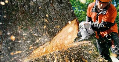 Kaceni-stromu