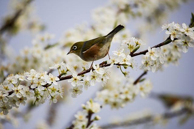 blossom-1324088_640