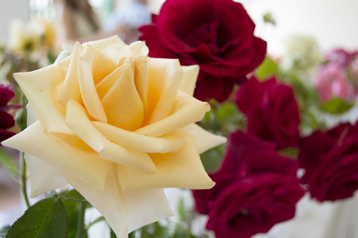 veltrusy-slavnost růží1 (1)