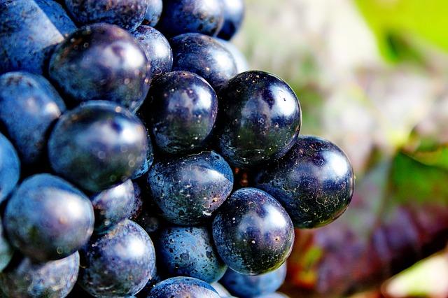 grapes-2380806_640
