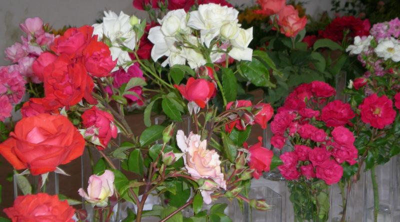 slavnost růží veltrusy 1