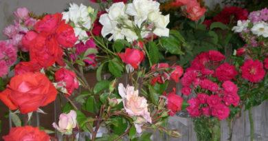 Slavnosti růží Veltrusy