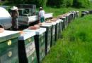 Farmou roku je Včelí farma Cihlářovi zKopeče na Mělnicku