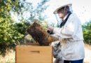 Ve Spolaně chovají včely, výbornou kvalitu medu potvrdily laboratorní