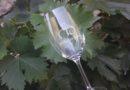 Mělnický košt opět zaklepe na vinné sudy místních vinařů